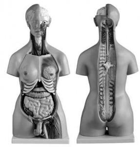 anatomia_pasta