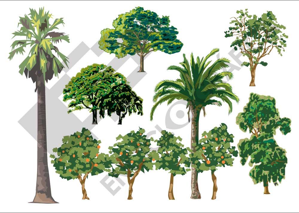 Árboles mediterráneos