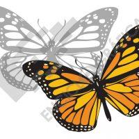 Mariposa monarca. Plantilla para stencil