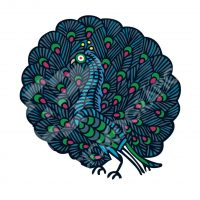 Pavo real indio