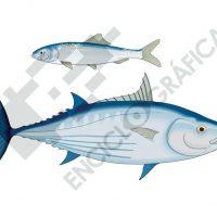 Sardina y atún